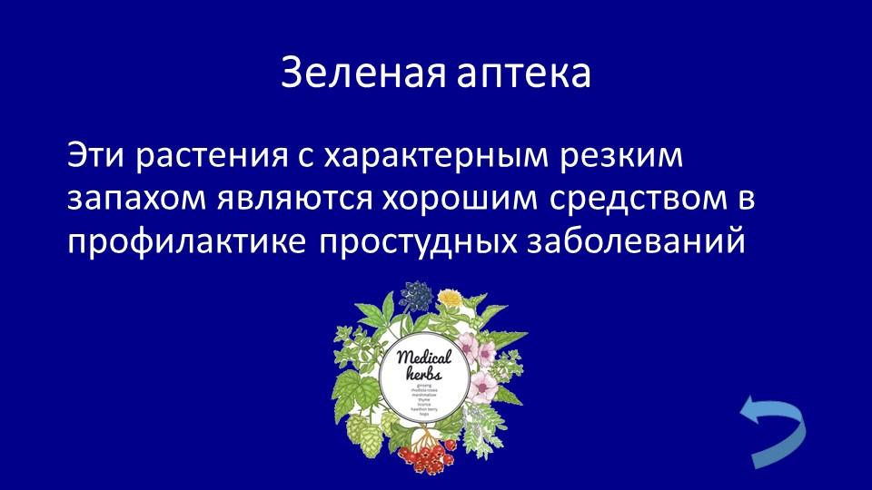 Зеленая аптекаЭти растения с характерным резким запахом являются хорошим сред...