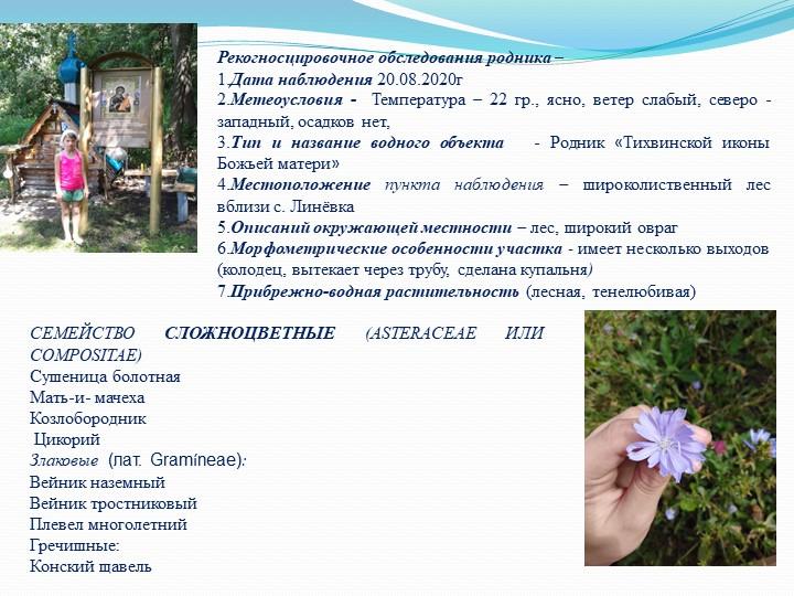 СЕМЕЙСТВОСЛОЖНОЦВЕТНЫЕ(ASTERACEAE ИЛИ COMPOSITAE)Сушеница болотнаяМать-и-...