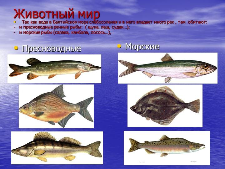 Животный мир         ПресноводныеМорскиеТак как вода в Балтийском море слабос...
