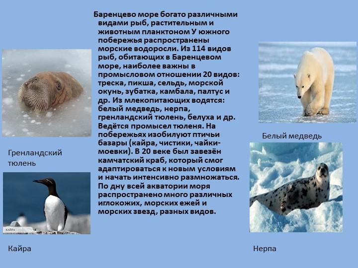 Баренцево море богато различными видами рыб, растительным и животным пла...
