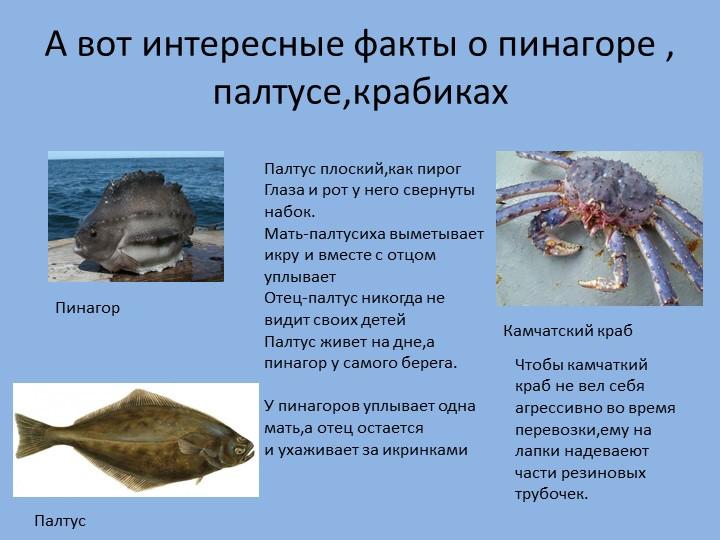 А вот интересные факты о пинагоре , палтусе,крабикахПинагорПалтусКамчатский к...
