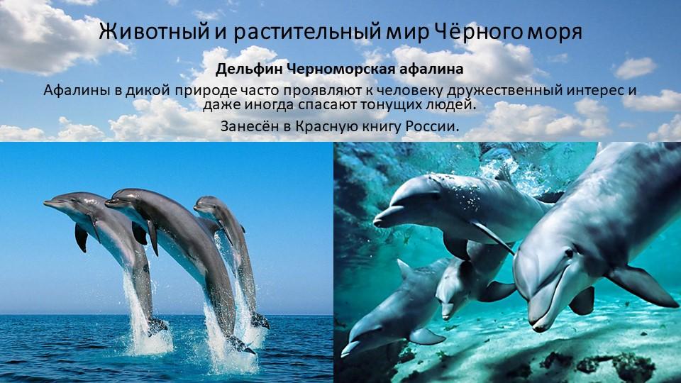 Животный и растительный мир Чёрного моряДельфин Черноморская афалинаАфалины...