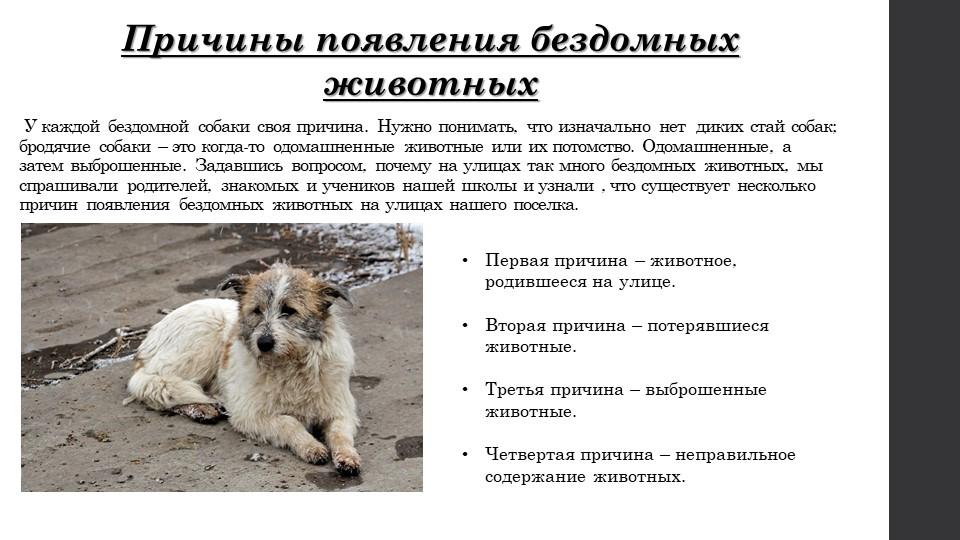 У каждой бездомной собаки своя причина. Нужно понимать, что изначально нет...