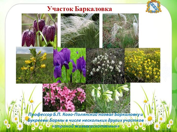 Участок БаркаловкаПрофессор Б.П. Козо-Полянский назвал Баркаловку и Букреевы...