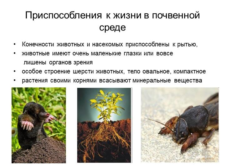 Приспособления к жизни в почвенной средеКонечности животных и насекомых присп...
