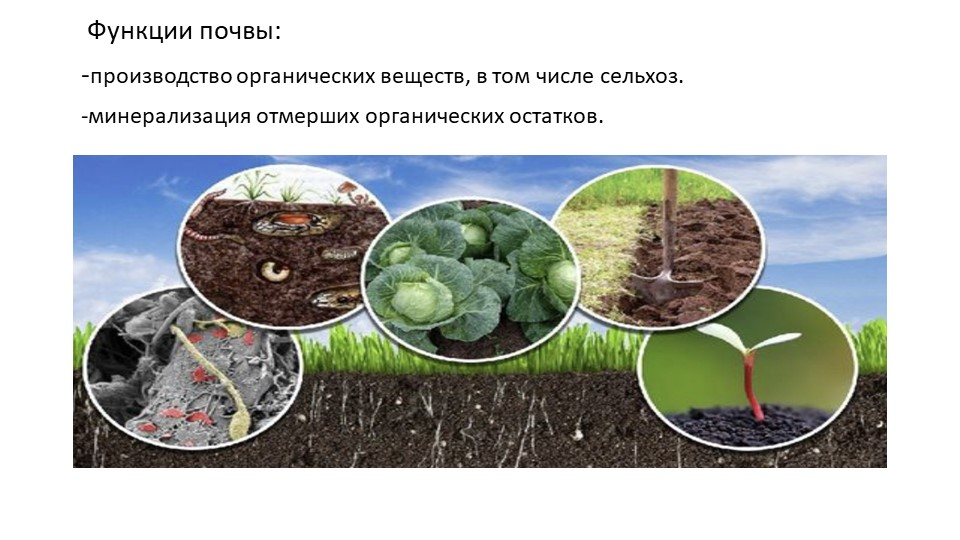 Функции почвы:-производство органических веществ, в том числе сельхоз.-мин...