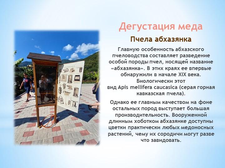 Дегустация медаПчела абхазянкаГлавную особенность абхазского пчеловодства с...
