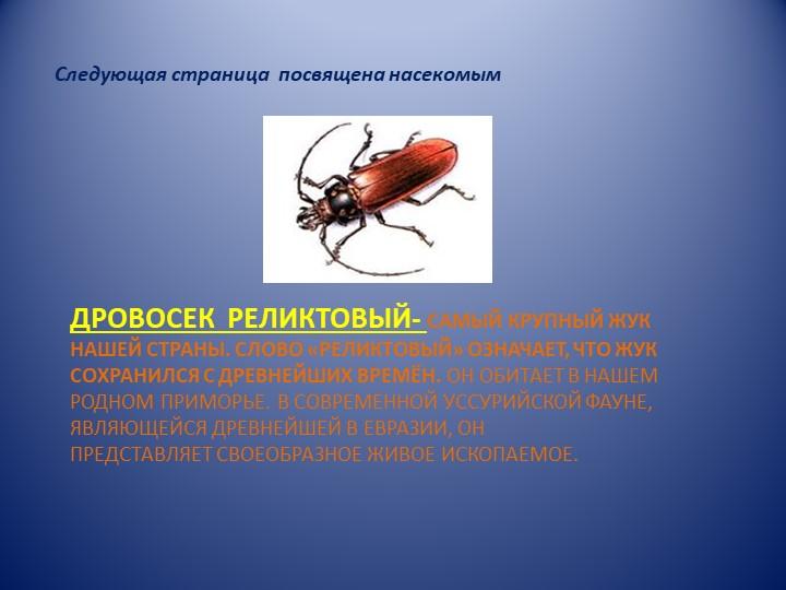 дРОВОСЕК  РЕЛИКТОВЫЙ- самый крупный жук нашей страны. Слово «реликтовый» озна...