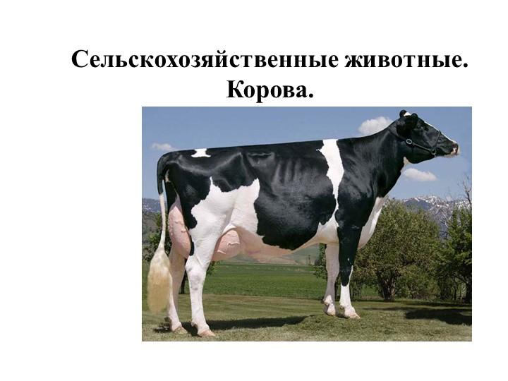 Сельскохозяйственные животные. Корова.