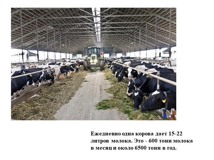 Ежедневно одна корова дает 15-22 литров молока. Это - 600 тонн молока в месяц...