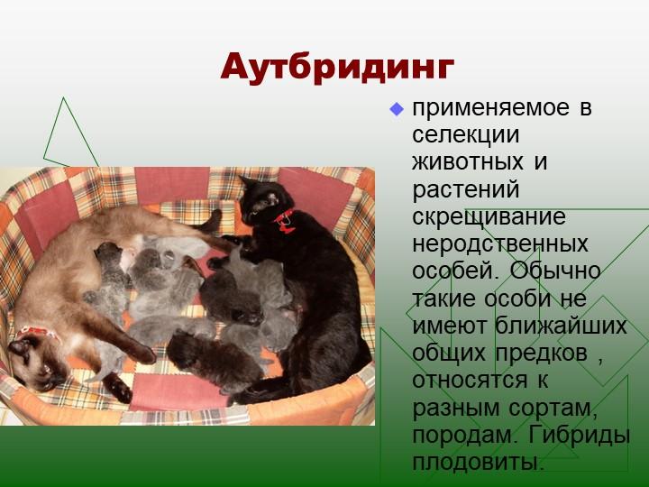 Аутбридингприменяемое в селекции животных и растений скрещивание неродственны...