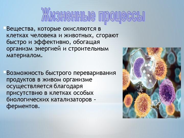 Вещества, которые окисляются в клетках человека и животных, сгорают быстро и...