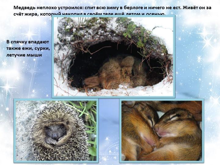 Медведь неплохо устроился: спит всю зиму в берлоге и ничего не ест. Живёт он...