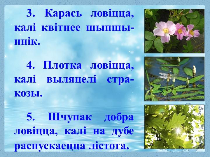 3. Карась ловіцца, калі квітнее шыпшы-ннік. 4. Плотка ловіцца, калі выляцелі...