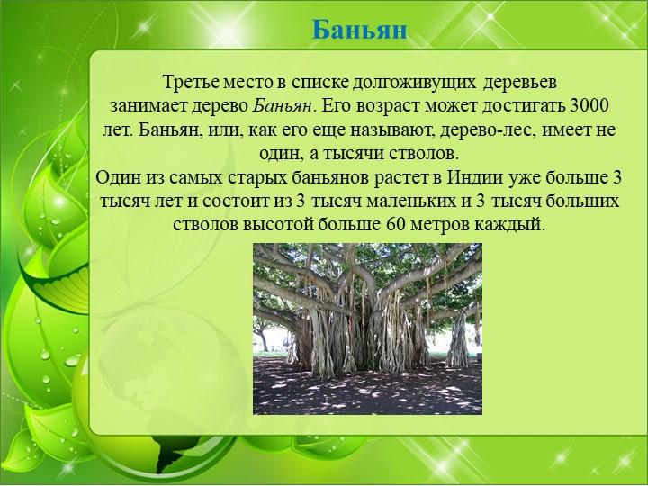 Баньян Третье место в списке долгоживущих деревьев занимаетдерево Баньян....