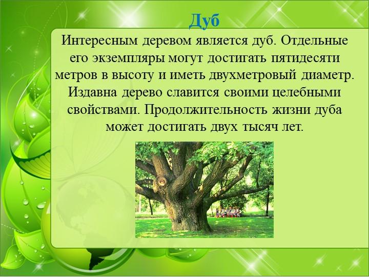 ДубИнтересным деревом является дуб. Отдельные его экземпляры могут достигать...