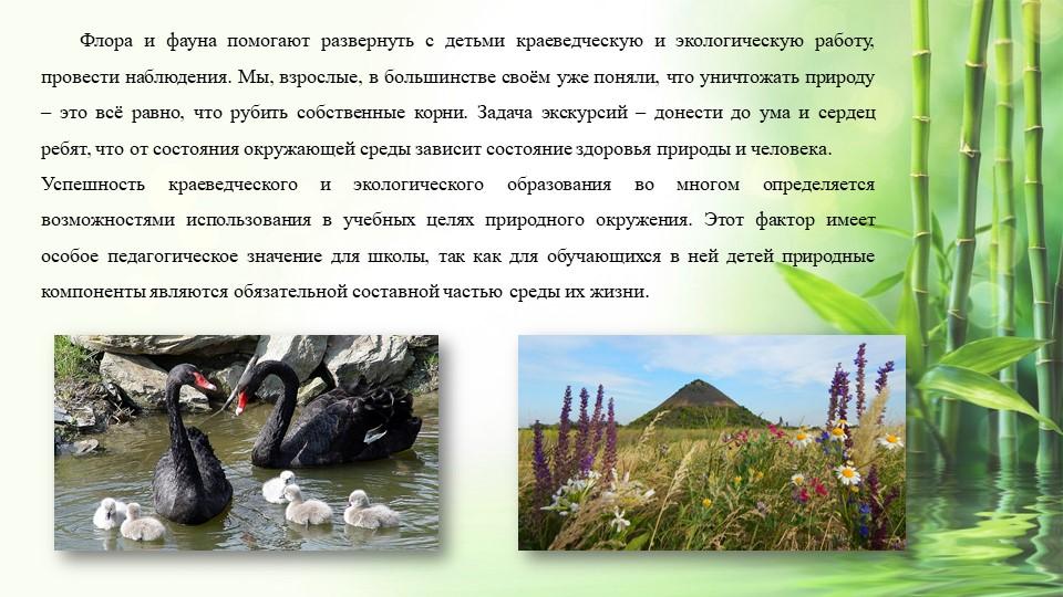 Флора и фауна помогают развернуть с детьми краеведческую и экологическую рабо...
