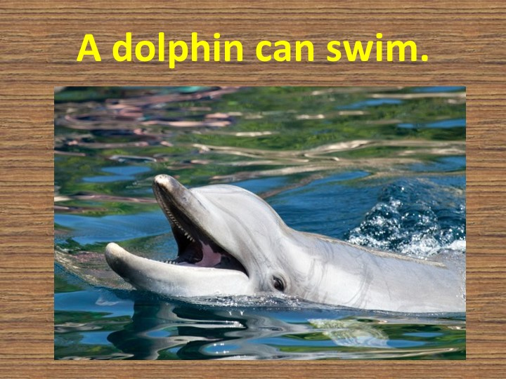 A dolphin can swim.