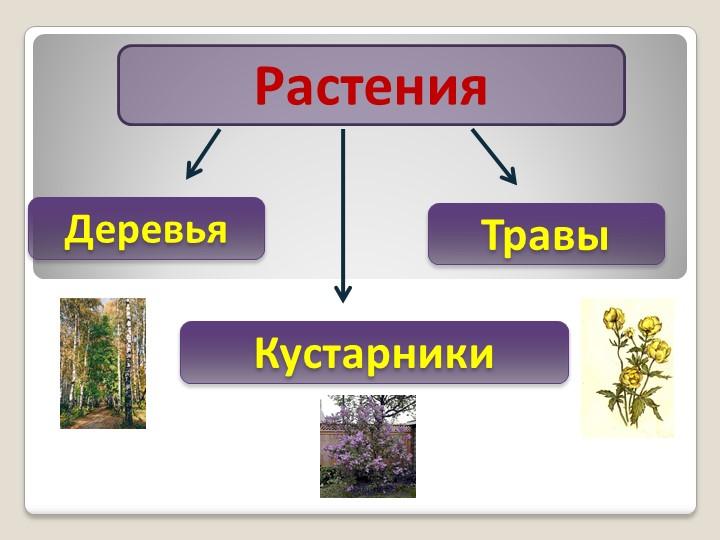 РастенияДеревьяКустарникиТравы