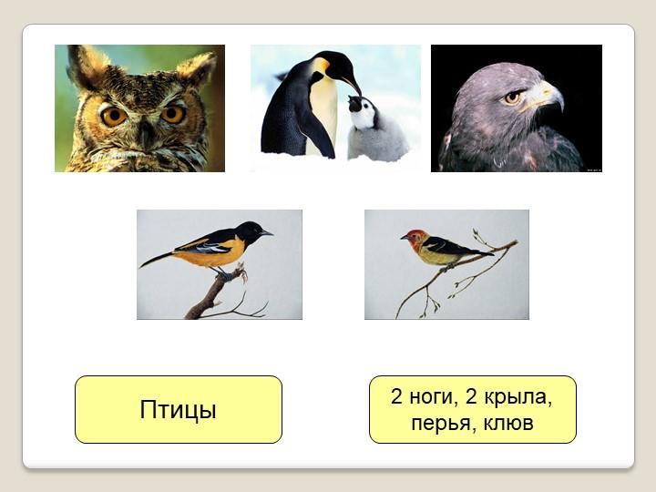 Птицы2 ноги, 2 крыла,перья, клюв