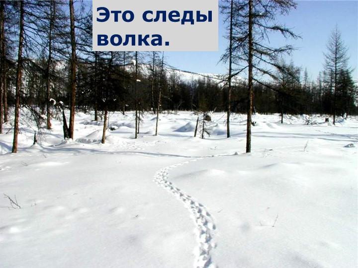 Это следы волка.