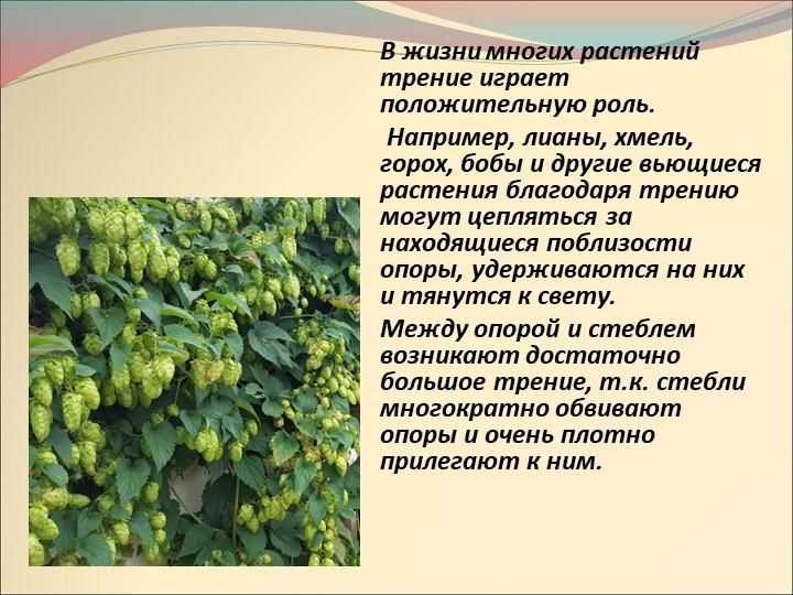В жизни многих растений трение играет положительную роль.  Например, лианы,...