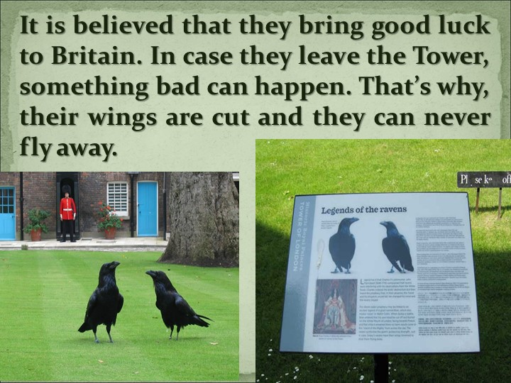 It is believed that they bring good luck to Britain. In case they leave the T...