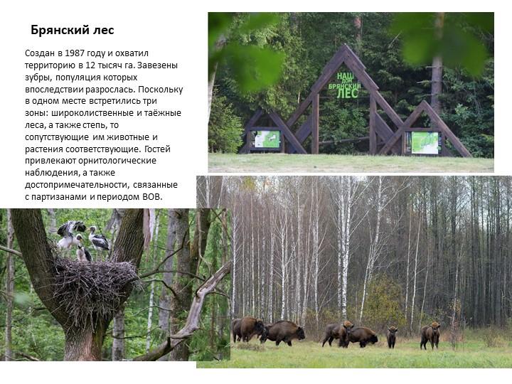 Брянский лесСоздан в 1987 году и охватил территорию в 12 тысяч га. Завезены з...