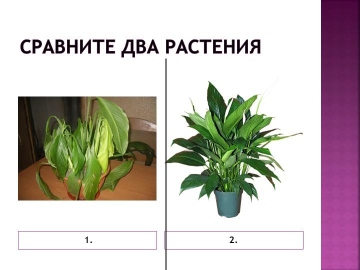 Сравните два растения 1.2.