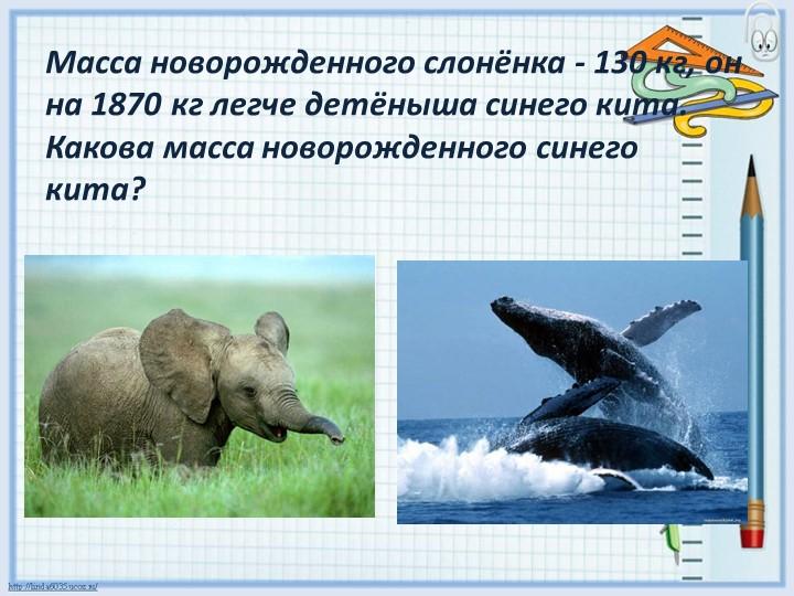 Масса новорожденного слонёнка - 130 кг, он на 1870 кг легче детёныша синего к...