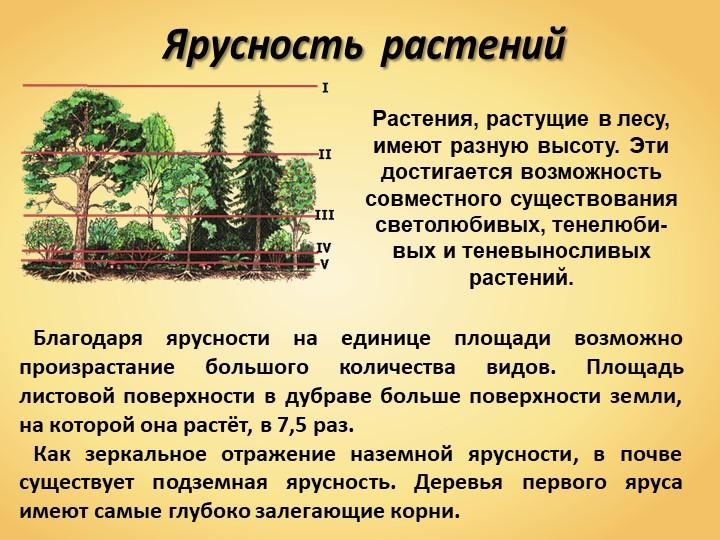 Ярусность  растенийРастения, растущие в лесу, имеют разную высоту. Эти достиг...