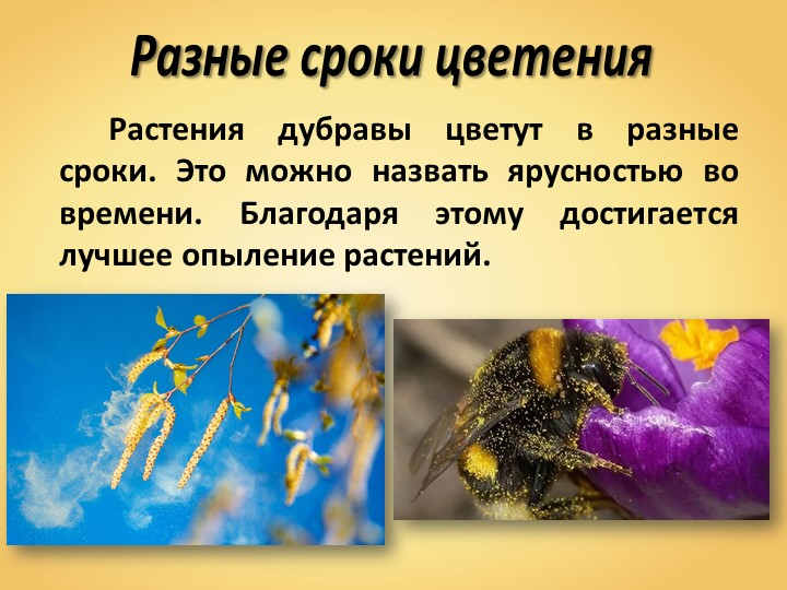 Разные сроки цветенияРастения дубравы цветут в разные сроки. Это можно назв...