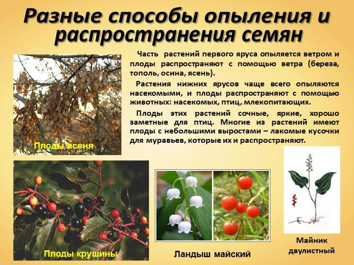 Разные способы опыления и распространения семян   Часть  растений первого яр...