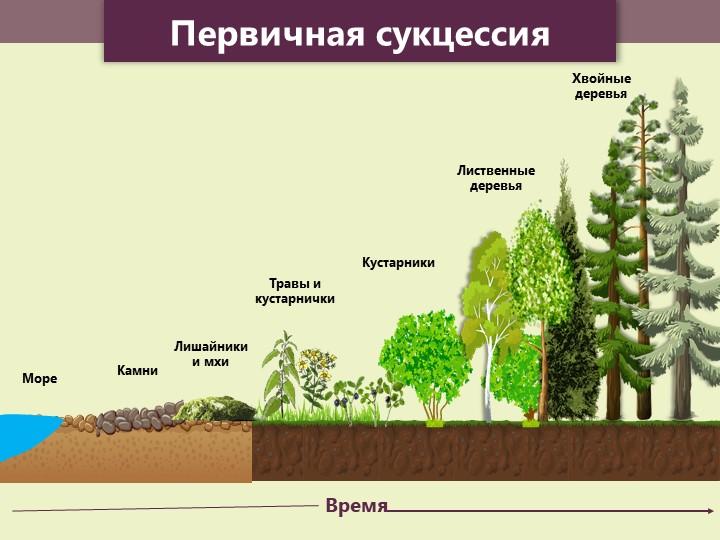 ВремяКамниЛишайники и мхиТравы и кустарничкиКустарникиЛиственные деревьяХвойн...