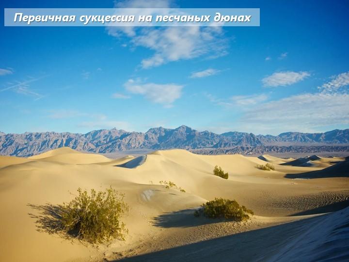 Первичная сукцессия на песчаных дюнах