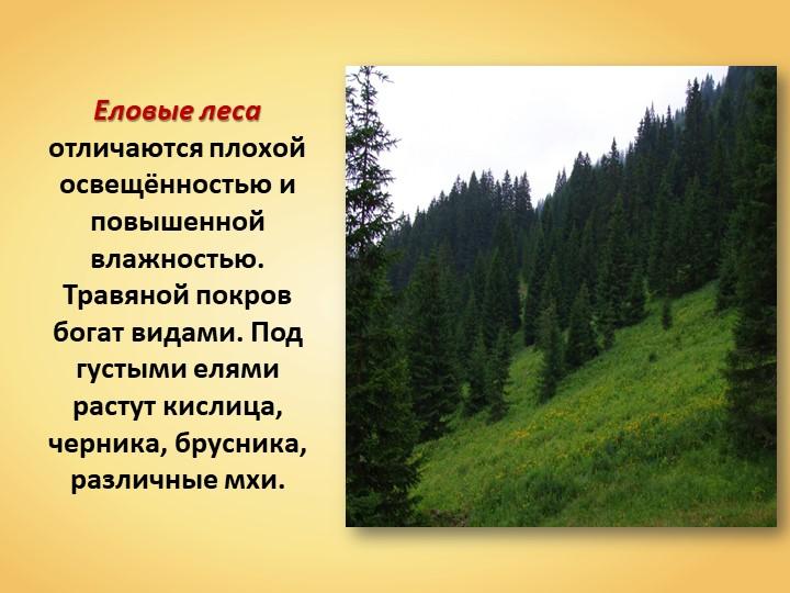 Еловые леса отличаются плохой освещённостью и повышенной влажностью. Травяной...