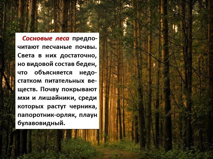 Сосновые леса предпо-читают песчаные почвы. Света в них достаточно, но вид...