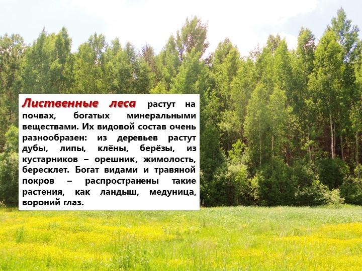 Лиственные леса растут на почвах, богатых минеральными веществами. Их видовой...