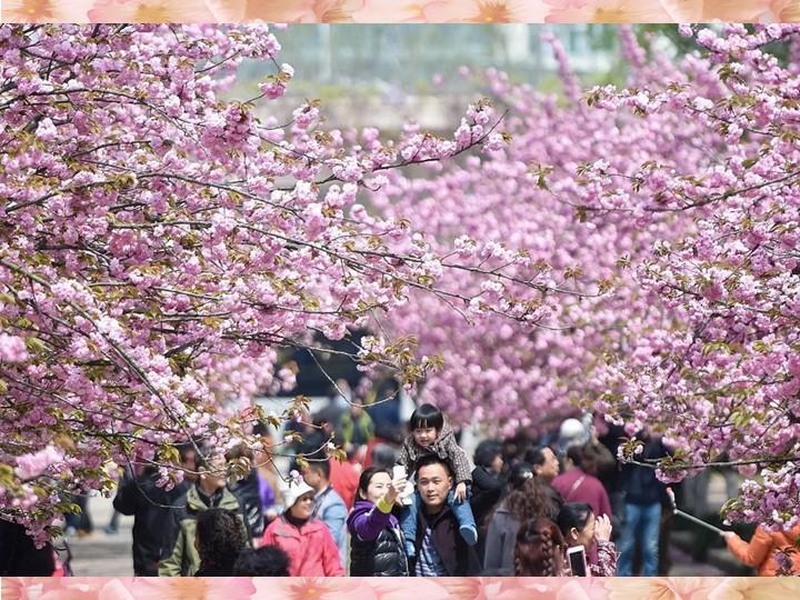 Каждый год в парках, аллеях, садах, возле дворцов и храмов собирается множест...