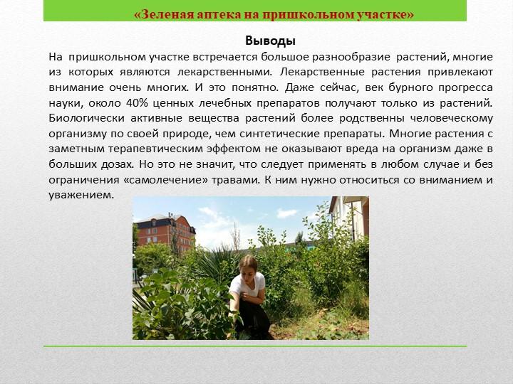 «Зеленая аптека на пришкольном участке»ВыводыНа  пришкольном участке встреч...
