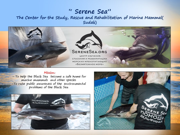 """"""" Serene Sea""""The Center for the Study, Rescue and Rehabilitation of Marine M..."""