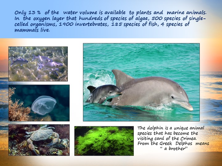 Only 13 %  of the  water volume is available  to plants and  marine animals....