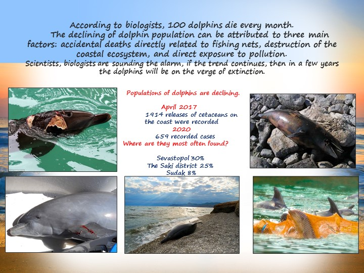 According to biologists, 100 dolphins die every month.     The declining...