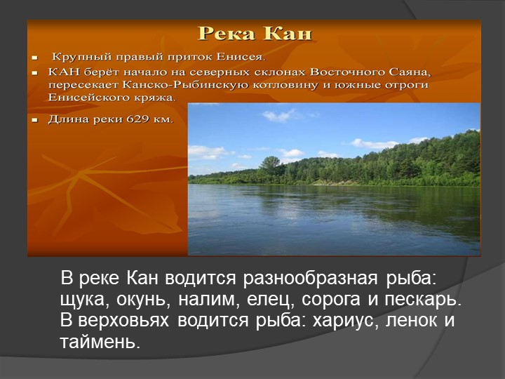 В реке Кан водится разнообразная рыба: щука, окунь, налим, елец, сорога и...