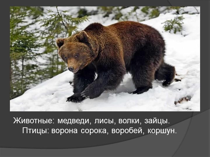 Животные: медведи, лисы, волки, зайцы.           Птицы: ворона сорока, воробе...