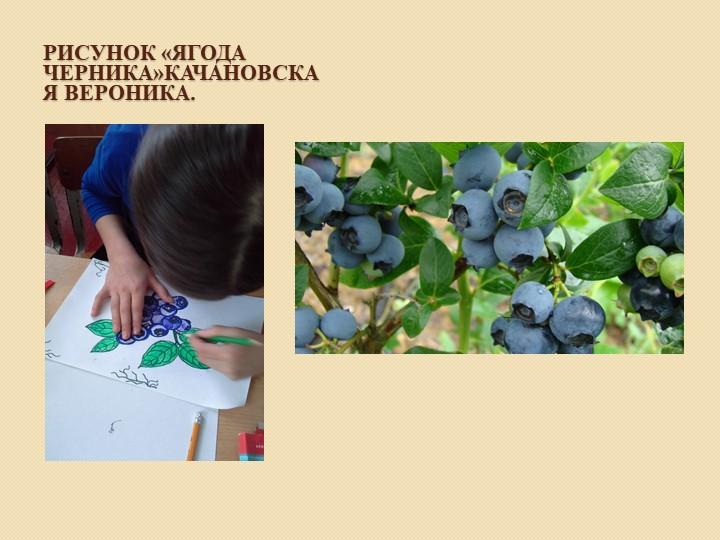 Рисунок «Ягода черника»Качановская Вероника.