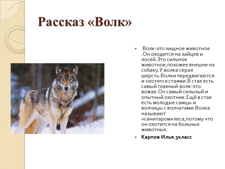 Рассказ «Волк» Волк-это хищное животное .Он оходится на зайцев и лосей.Это с...