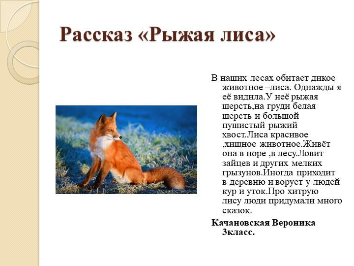Рассказ «Рыжая лиса»В наших лесах обитает дикое животное –лиса. Однажды я её...