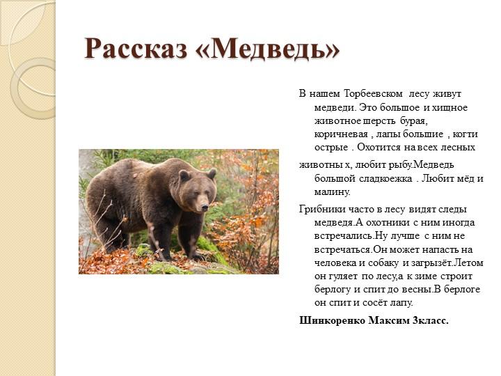 Рассказ «Медведь»В нашем Торбеевском  лесу живут медведи. Это большое и хищно...