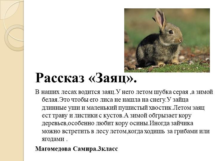 Рассказ «Заяц».В наших лесах водится заяц.У него летом шубка серая ,а зимо...